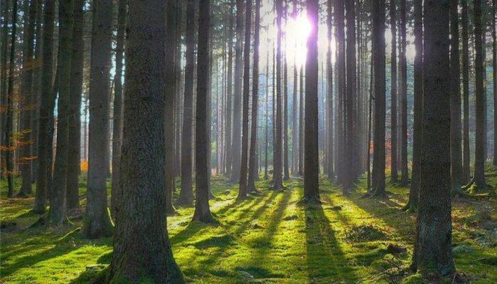 Уважаемые работники лесного хозяйства!