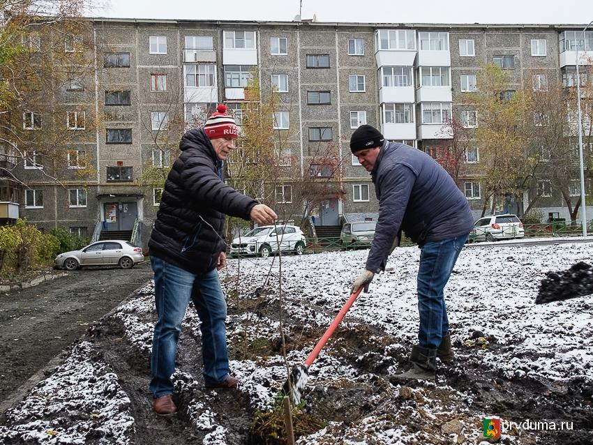 Александр Цедилкин высадил рябины во дворе на улице Вайнера